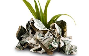 money plant image