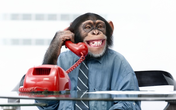[Slika: monkey-customer-service-600.jpg]