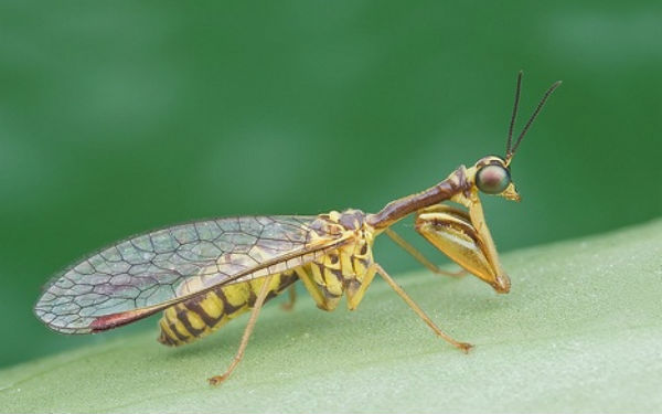 Flickr-Insect