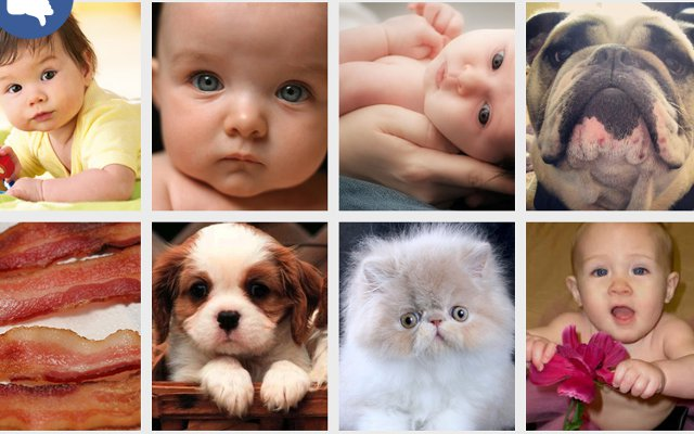 mashable reports hate baby photos love cat memes chrome extension