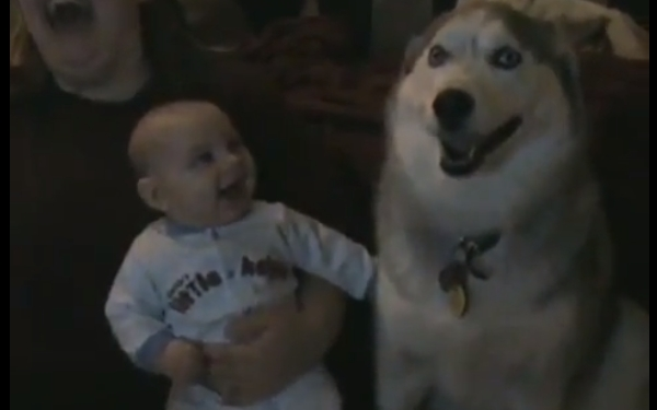 Clips Of Babies Laughing At Dogs Video