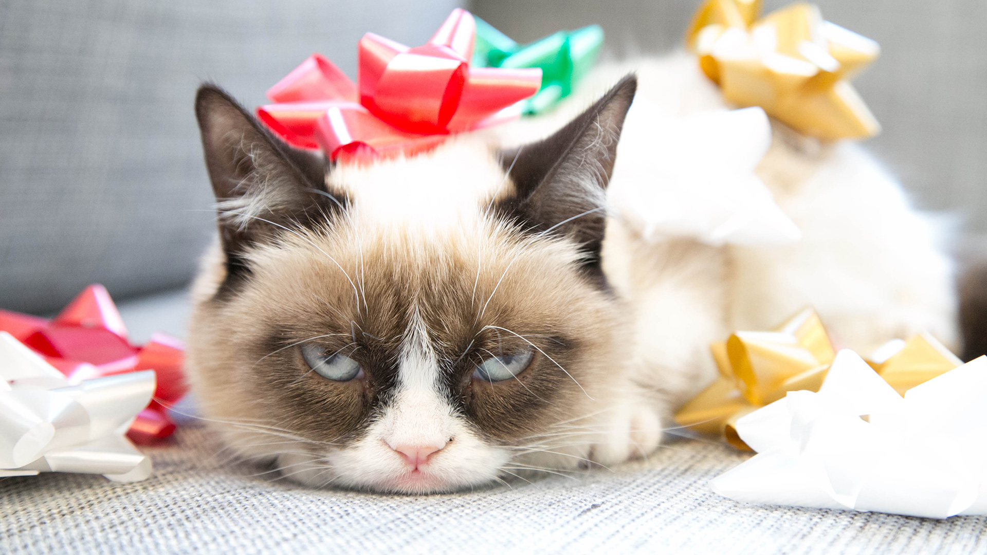 5 ways the internet has ruined Christmas - Memeburn