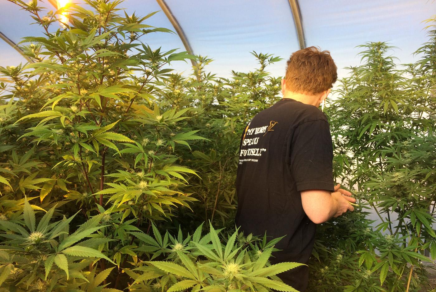http://mashable.com/2014/12/31/marijuana-farm-startup/